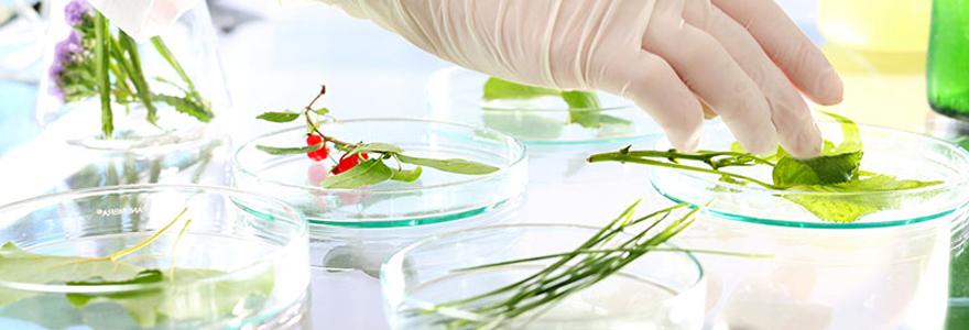 Traitement naturel phytothérapie