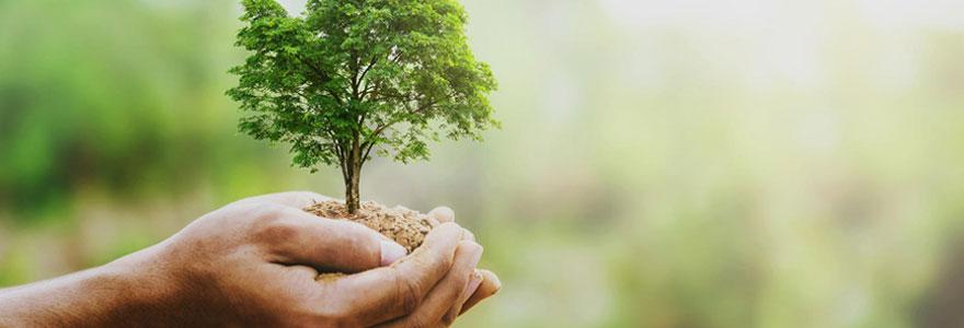 La signification de l'arbre de vie